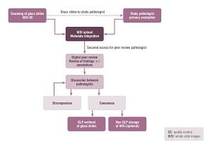 Digital Pathology peer review road map.