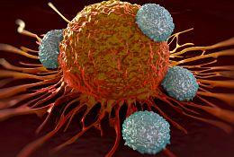 Tumor studies