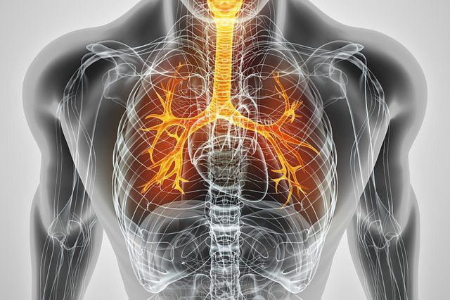 In vitro and in vivo models are necessary for proving safety for drugs and chemicals that could be exposed to the lungs.