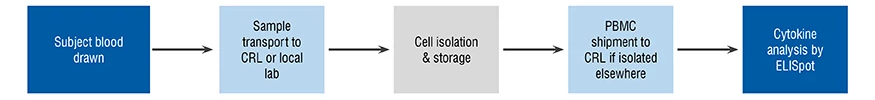 A flow diagram demonstrating the clinical sample workflow from blood draw to sample transport through to cell isolation and cell storage and finally to cytokine analysis by ELISpot testing.
