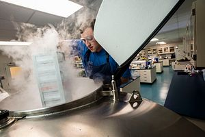 Charles River technician placing frozen cell lines in liquid nitrogen dewars for cell banking