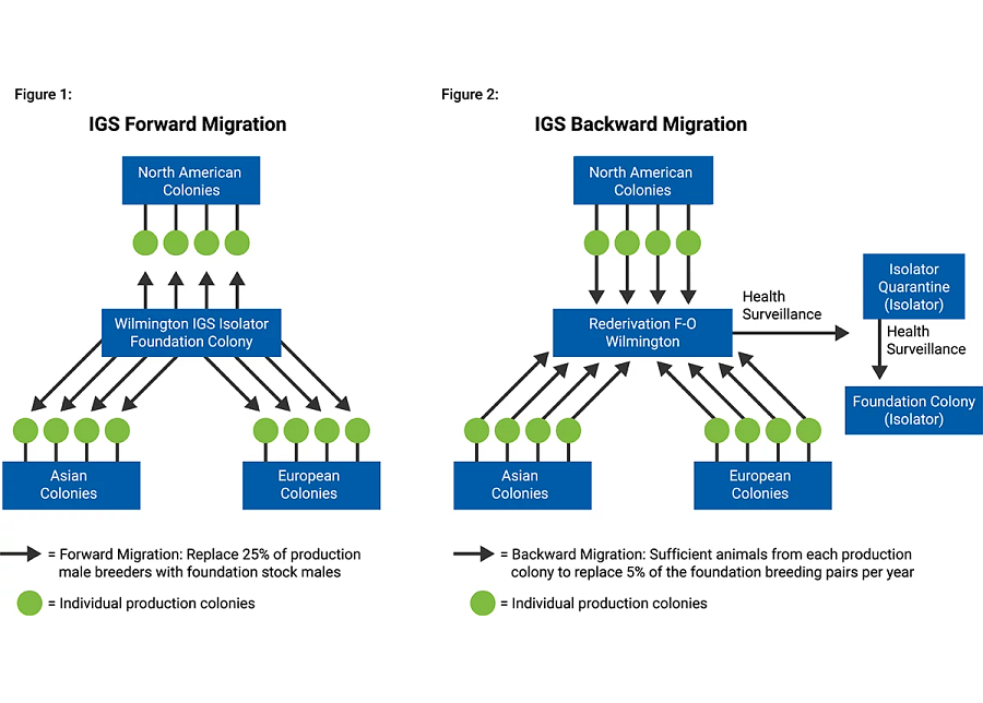 charts showing IGS migration