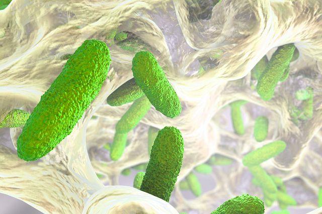 Antibiotic-resistant infectious agent in lab mice
