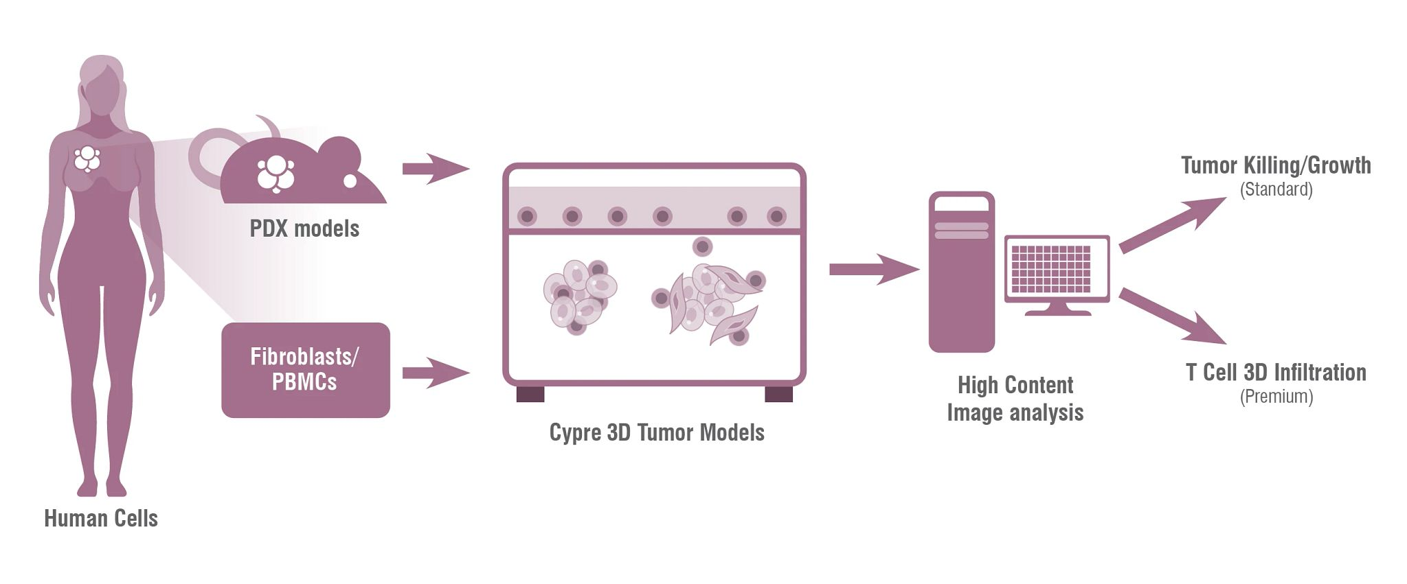 Human cells are isolated and introduced into the Falcon-X 3D tumor model platform, including PDX, fibroblasts and PBMCs. The resulting hydrogel 3D model is analyzed by high content imaging.