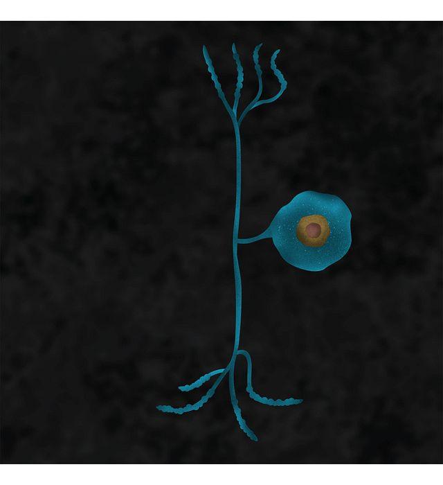 DS-6-pain-dorsal-root.jpg