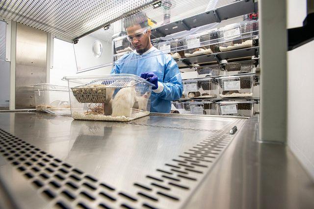 vivarium technician opening an isolator