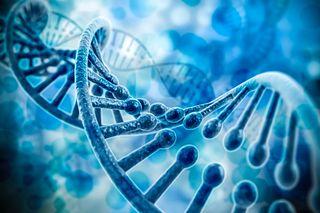 Custom transgenic mouse and rat model creation using CRISPR/Cas9
