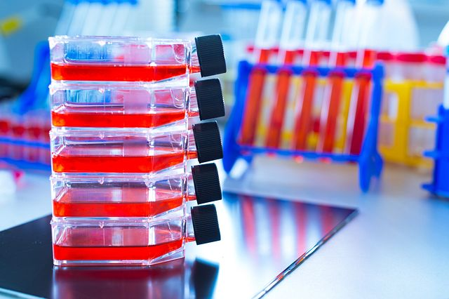 rapid sterility and in testing process for cell culture and cell based samples