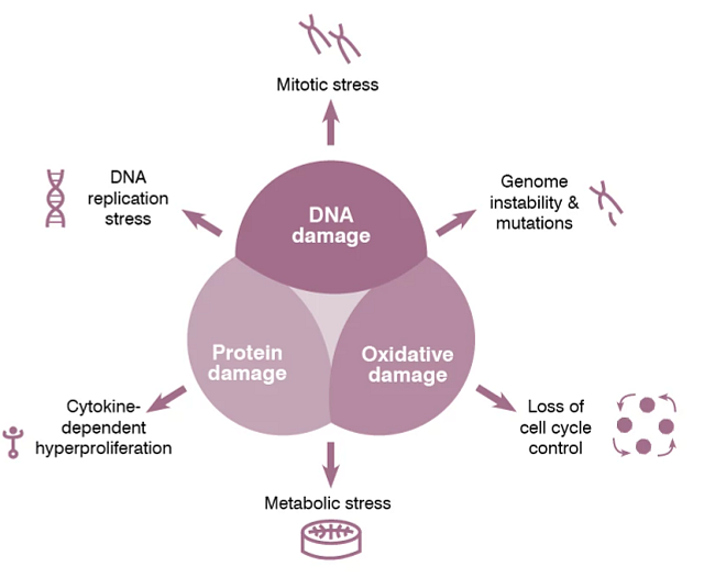 Diagram depicting the markers ToxTracker can identify that reveal genotoxic modes of action as well as non-genotoxic modes of action including DNA, protein, and oxidative damage