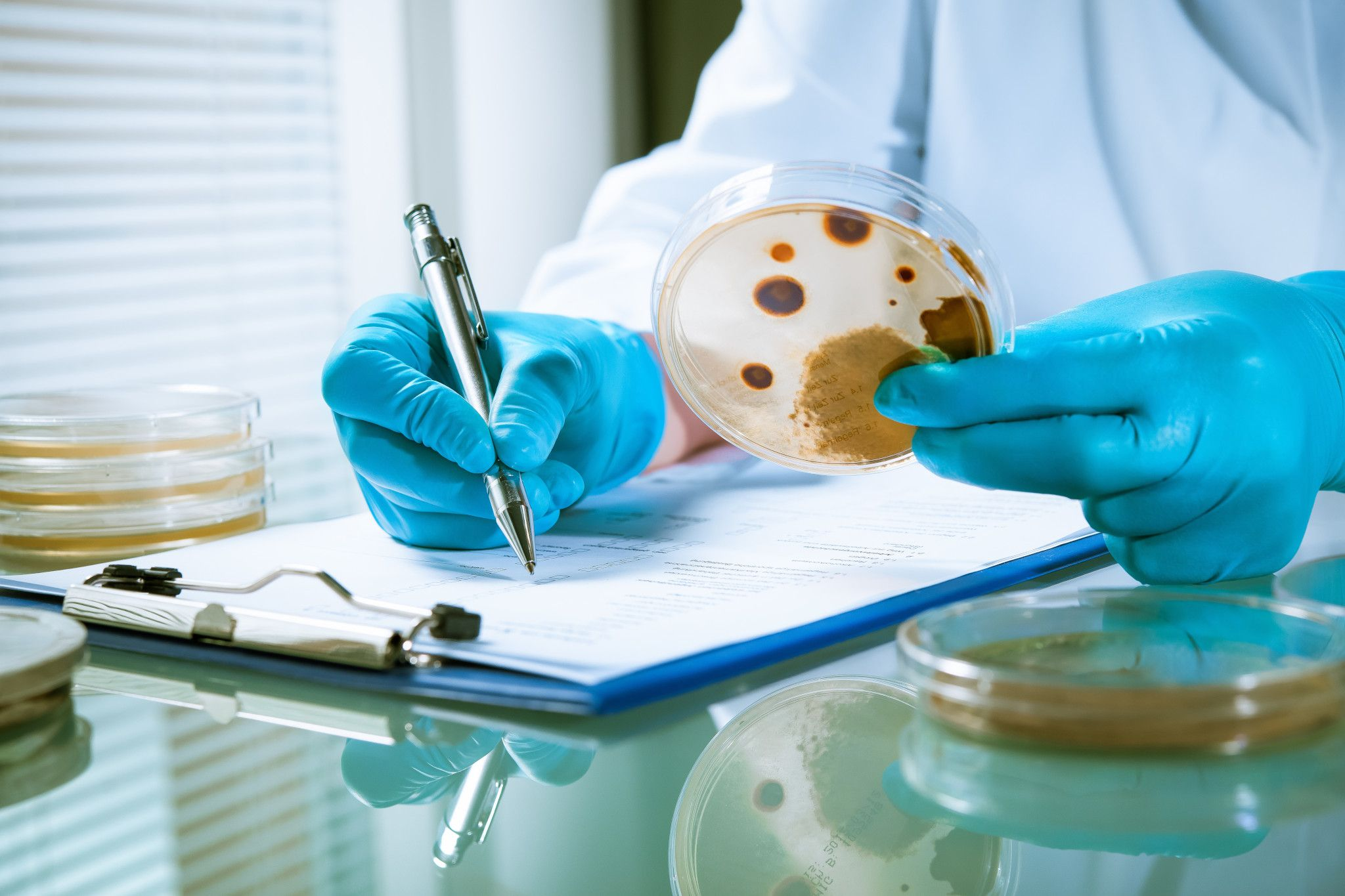 lab technician looking at microbial identification test results in a petri dish for a QC test sample