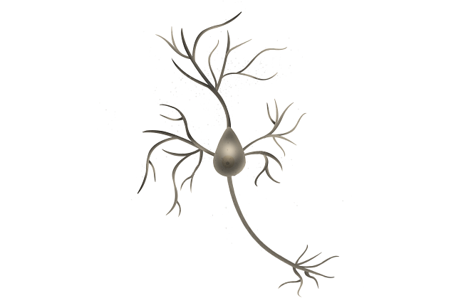 Image of a human brain neuron with a degenerating forebrain indicative of an Alzheimer's disease.