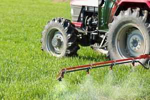 Tractor spraying wheat crops field with sprayer.