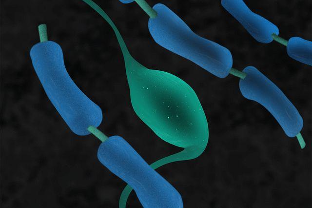 3D illustration of myelin sheathe.jpg