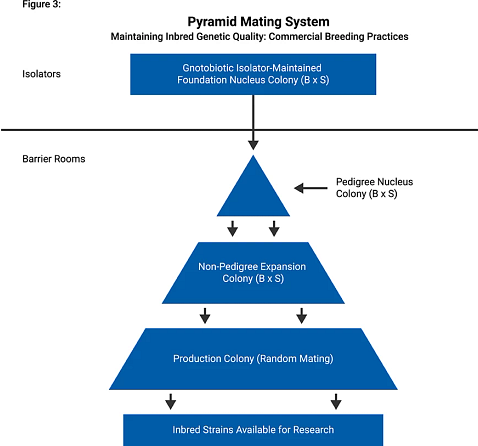 charts showing pyramid mating system