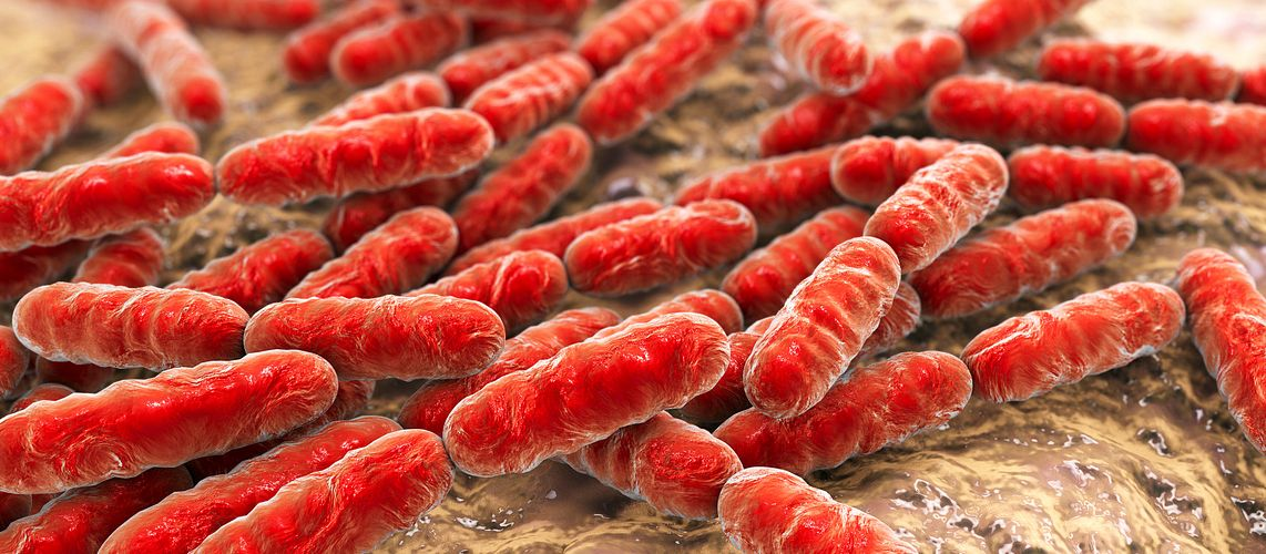 Red Bacillus rods