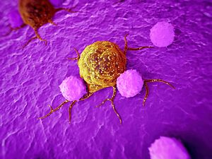 The immune system fighting cancer cells- Charles River has a range of immune-oncology models and assays.