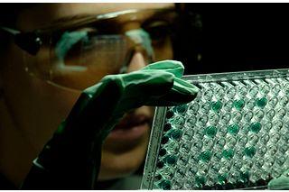 Technician examining an ELISA plate