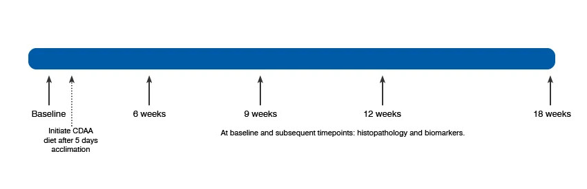 Image of timeline for onset of fibrosis in C57BL/6J NASH Mouse model offered at Charles River.