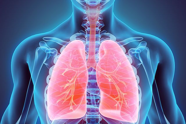 Inhalation and respiratory safety studies are required and Charles River offers regulated study capabilities to help pharmaceutical and biotechnology companies stay on track.