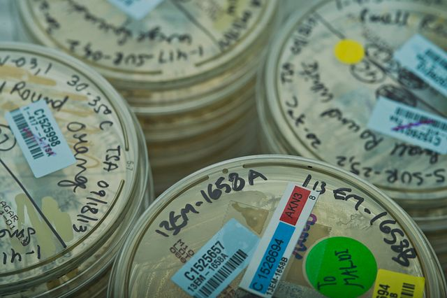 microbial samples received by Charles River for microbial identification and strain typing
