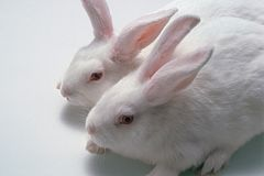 two white rabbits next to one another