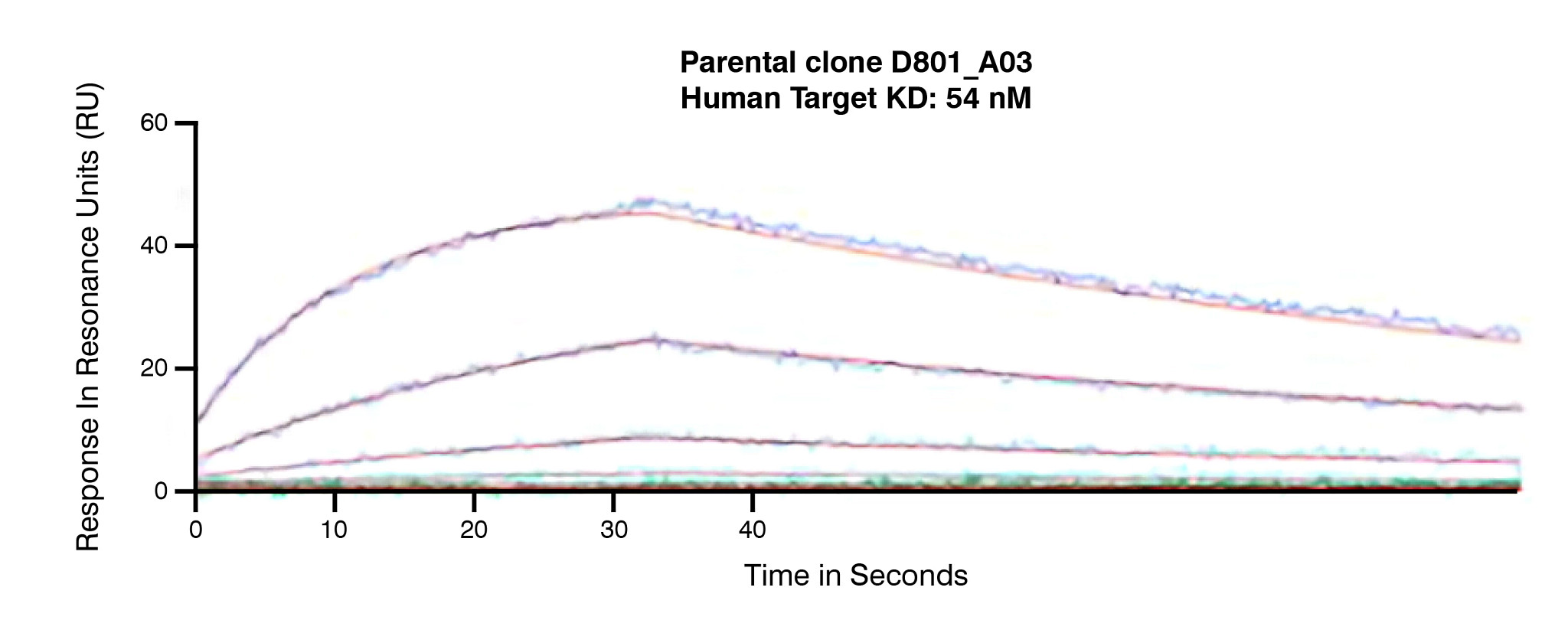 Tumbler antibody humanization produces a panel of leads and enables rapid antibody optimization with 10 times improvement in binding activity.