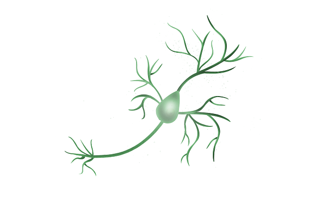 An Image of a pyramidal neuron which is the type of neuron in the forebrain implicated in most psychiatric disorders