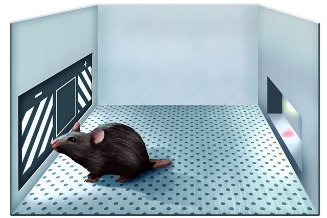 Illustration of touchscreen testing chamber where mice perform nose pokes at lighted windows and receive a food reward when task is performed correctly. This method is used to perform cognitive neuroscience tests and measures cognitive decline in models of neurodegenerative disease.