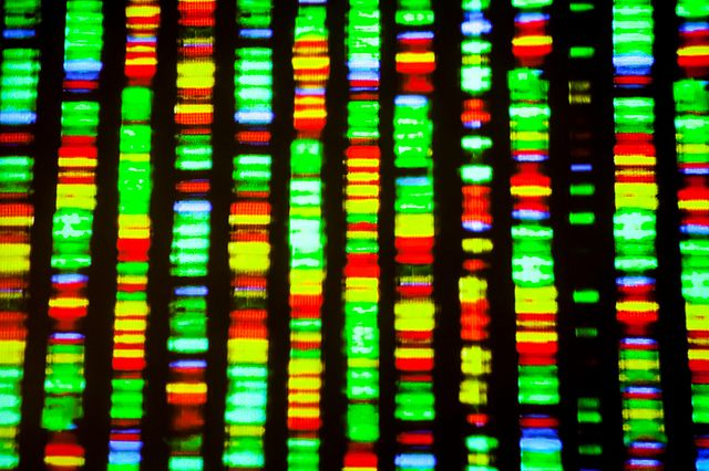 Graphical image of the human genome