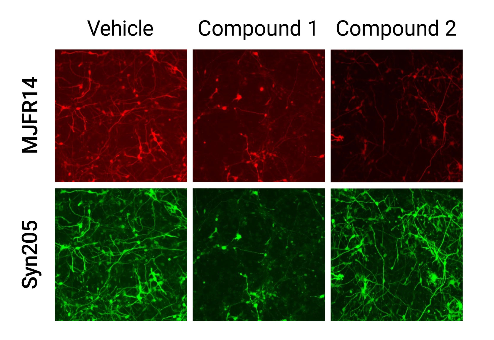 Data image of the cells treated in the alpha synuclein assay.