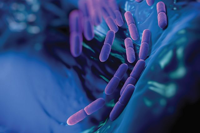 digital rendering of purple microscopic rod-shaped bacteria on blue background