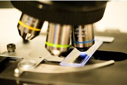 Microscope used to perform mycoplasma testing
