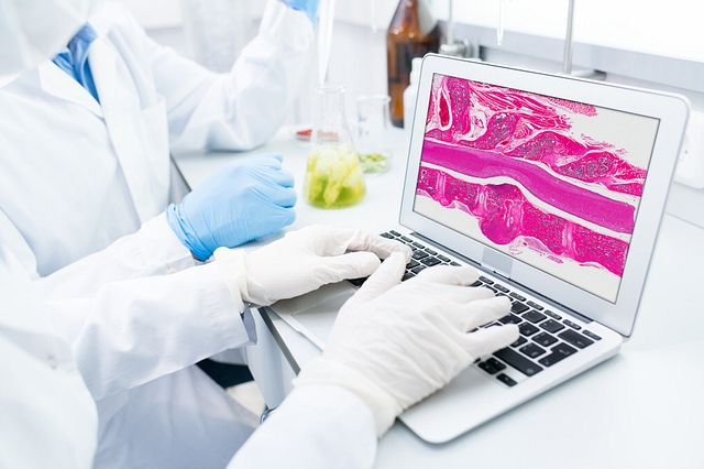 Microbiologists sitting at table testing samples of green vegetables and looking at computer model of food DNA on laptop screen.