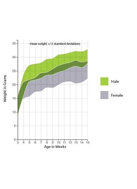NCG Mice Growth Chart - Charles River US (1).png