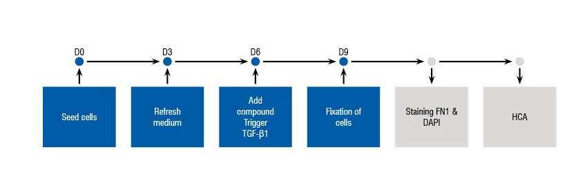 Diagram showing the process and timelines for the Epithelial-to-Mesenchymal (EMT) Assay.