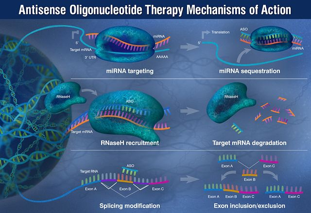 DS-antisense-oligonucleotide-aso-graphic.jpg