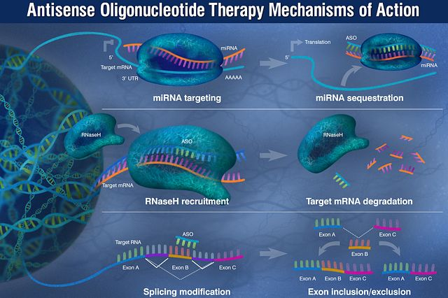 Graphic depiction of the three mechanism of action used for ASO therapies.