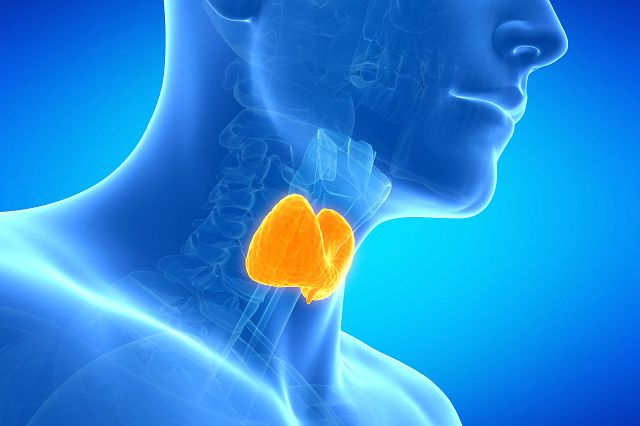 Charles River has implemented three in vitro assays for the assessment of thyroid disruption