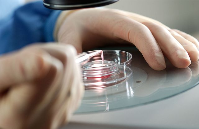 technician working on embryology