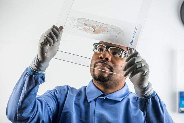 Technician examining a QWBA slide as part of a preclinical trial for the safety assessment profile of a drug. Our experienced team helps clients to anticipate challenges, avoid roadblocks and expedite preclinical research with a wide array of preclinical studies and expert guidance through this important safety assessment stage.