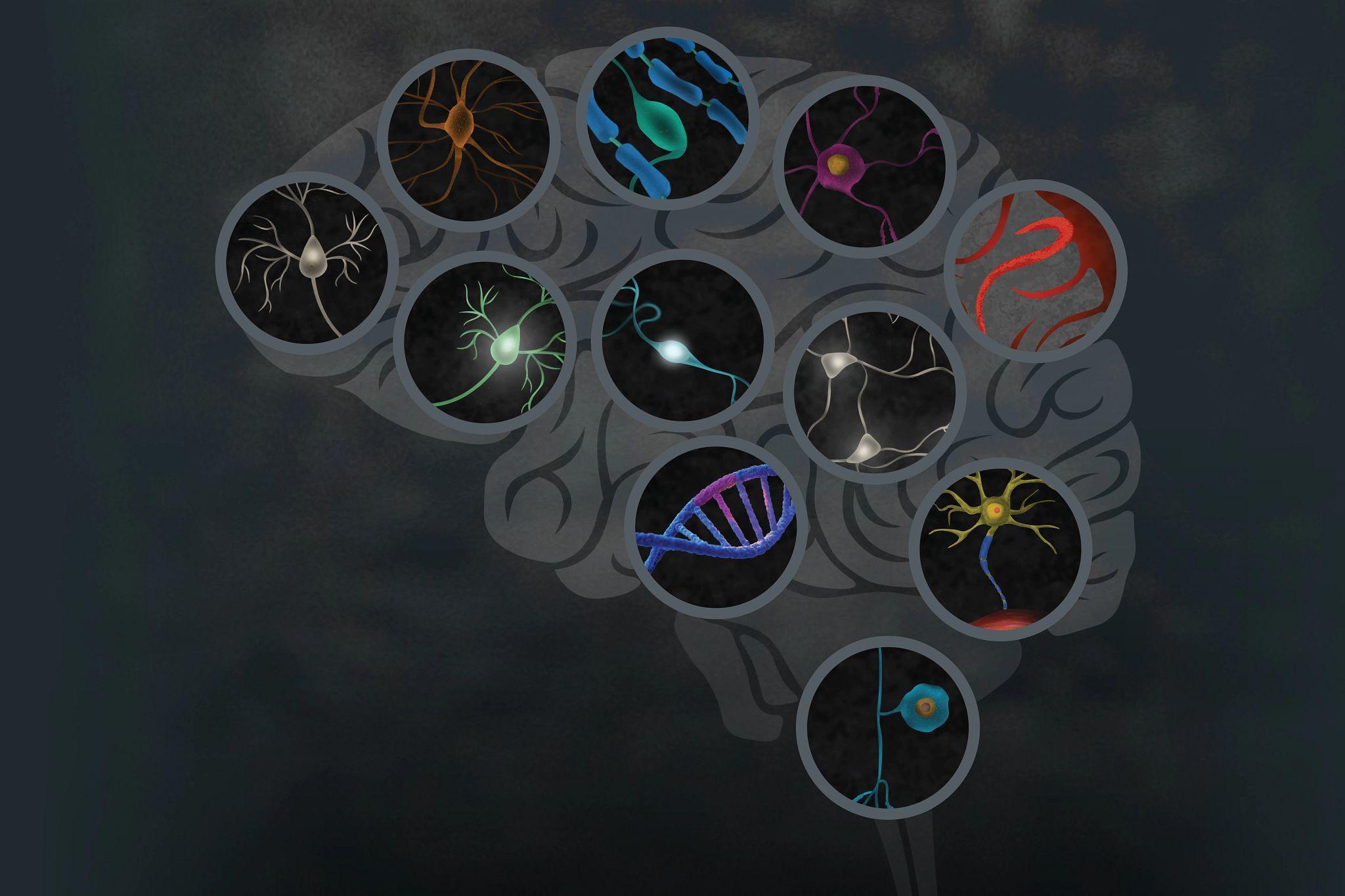 SFN-19-cns-neuroscience-illustration.tif
