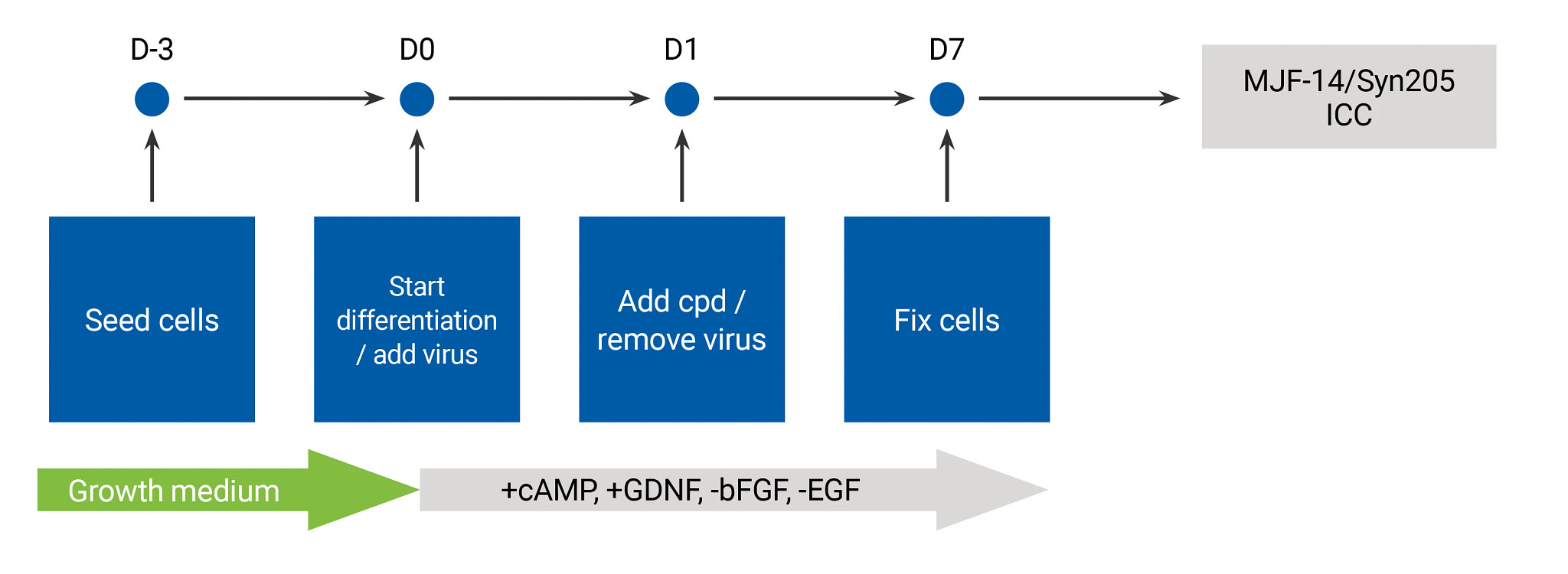 Flow chart showing the process and timeframe for the alpha synuclein assay.