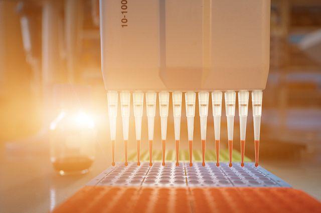 pcr plate in a laboratory